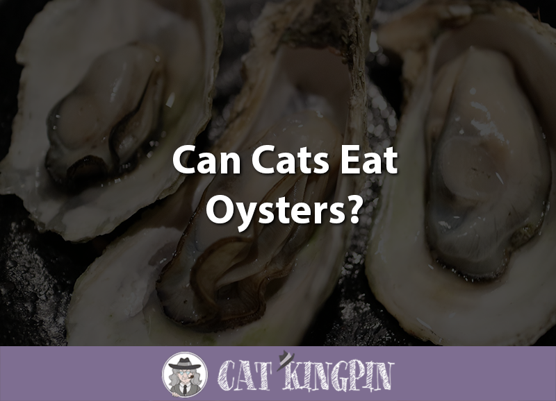 Can Cats Eat Oysters