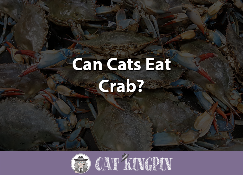 Can Cats Eat Crab