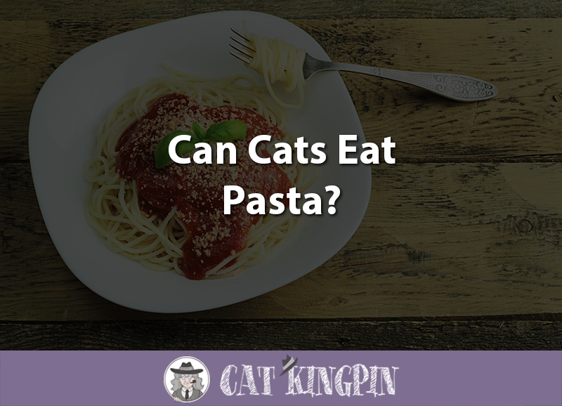 Can Cats Eat Pasta