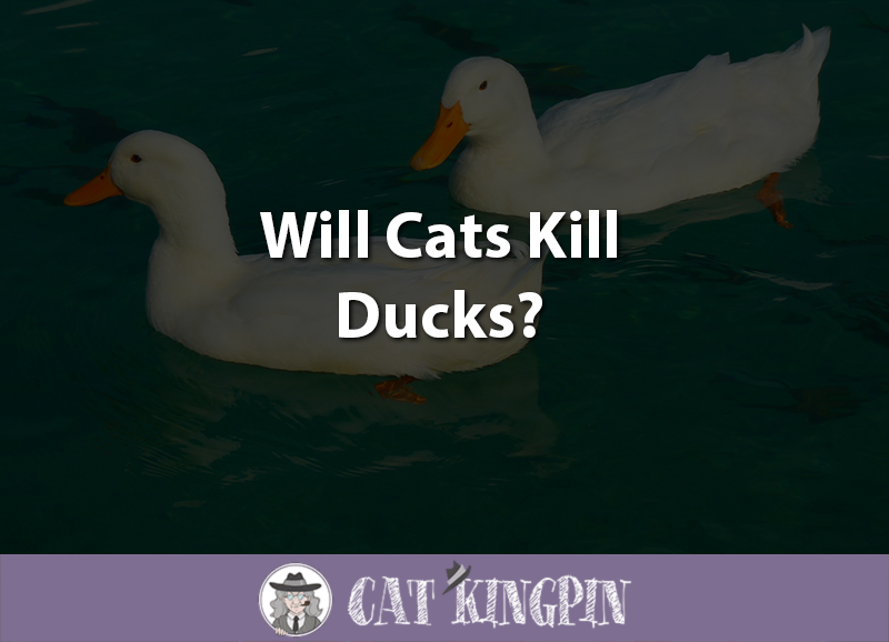 Will Cats Kill Ducks