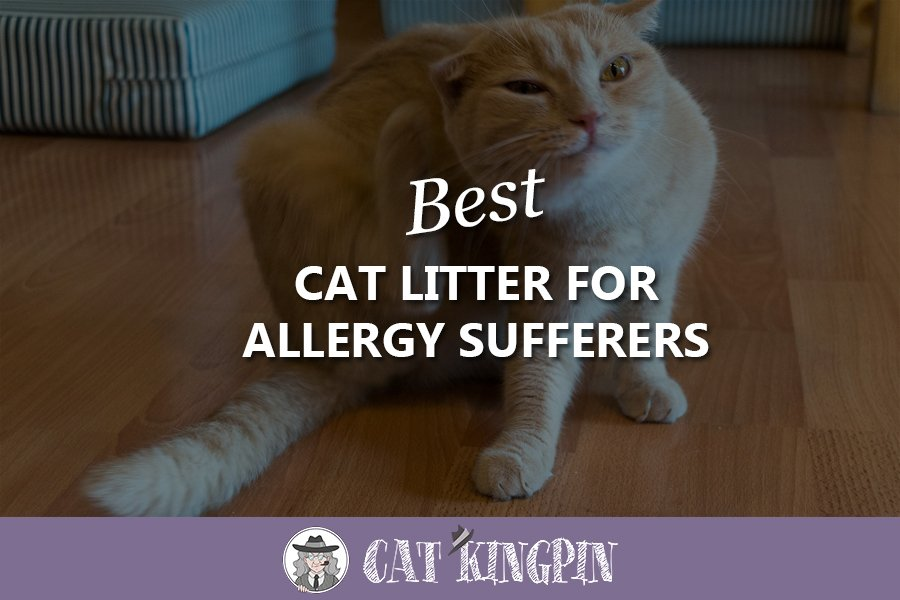 Best Cat Litter For Allergy Sufferers