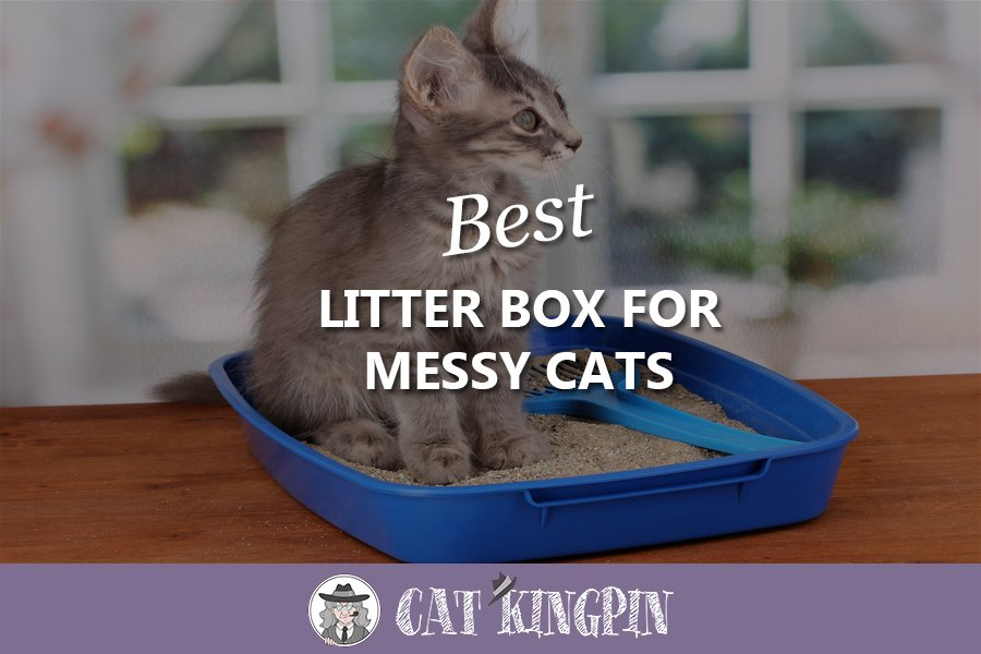 Best Litter Box For Messy Cats