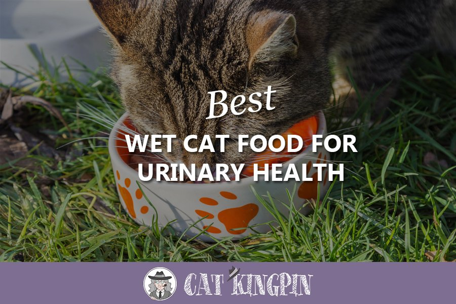 Best Wet Cat Food For Urinary Health