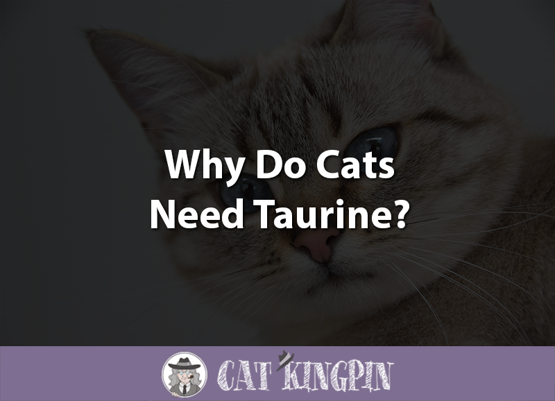 Why Do Cats Need Taurine