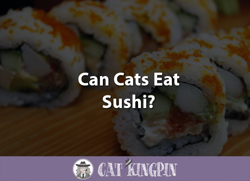 Can Cats Eat Sushi
