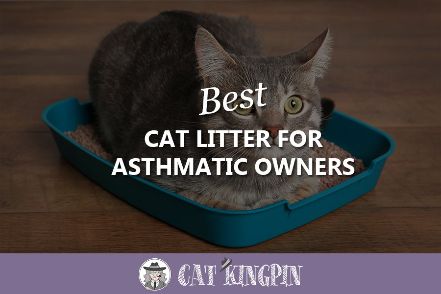 Best Cat Litter For Asthmatic Owners