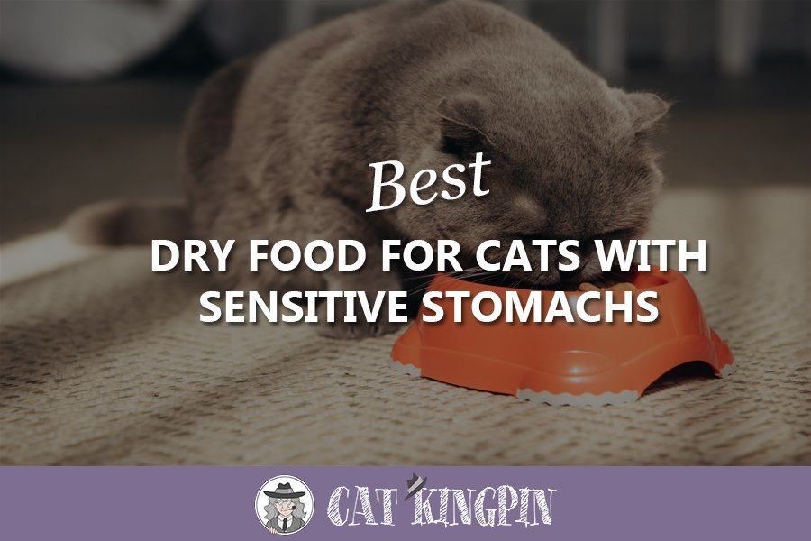 Best Dry Food For Cats With Sensitive Stomachs