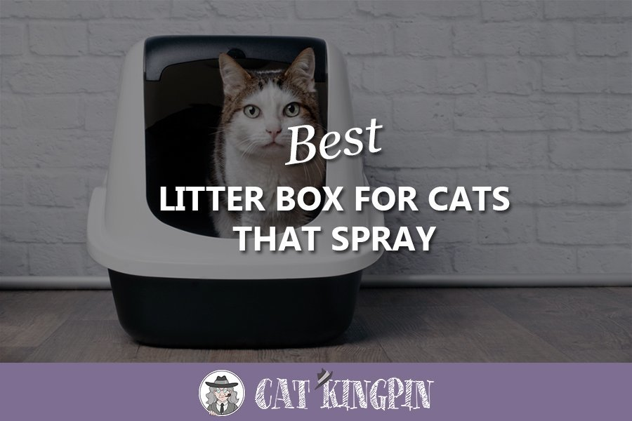 Best Litter Box For Cats That Spray
