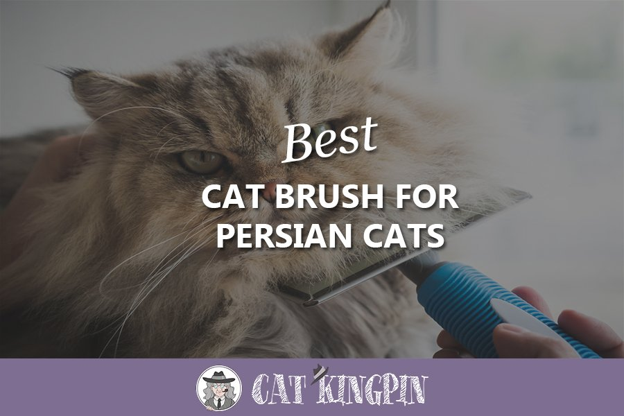 best cat brush for persian cats