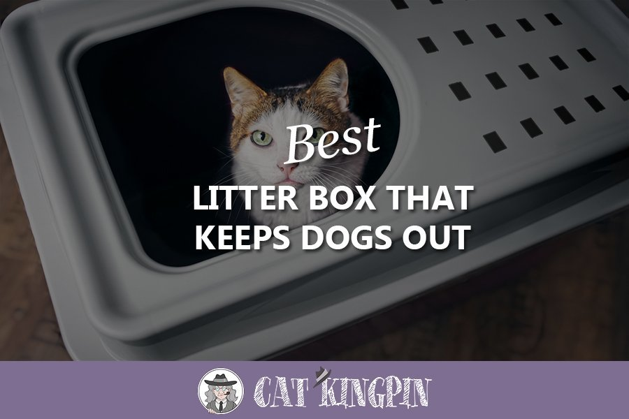 Best litter box that keeps dogs out
