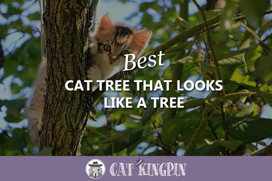 best cat tree that looks like a tree