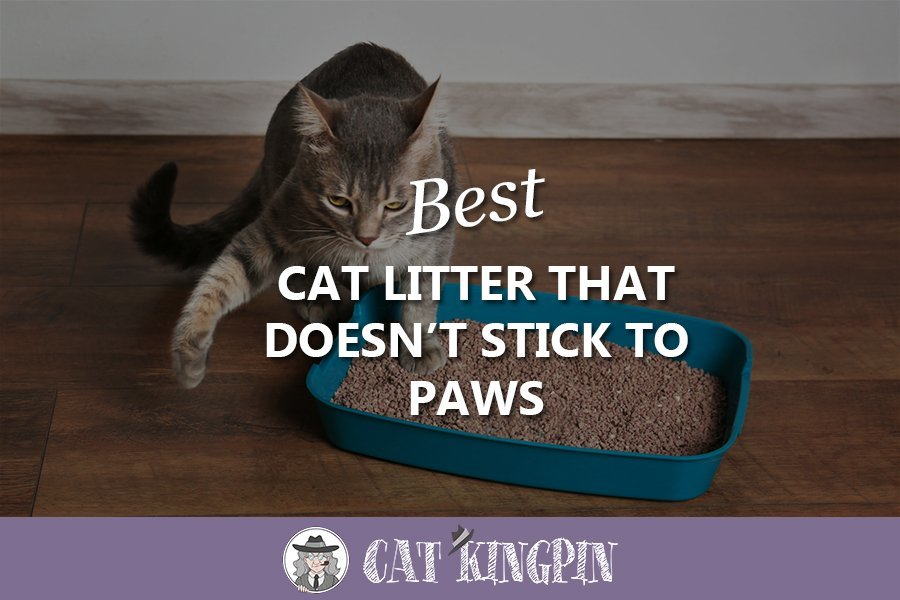 Best Cat Litter That Doesn't Stick to Paws