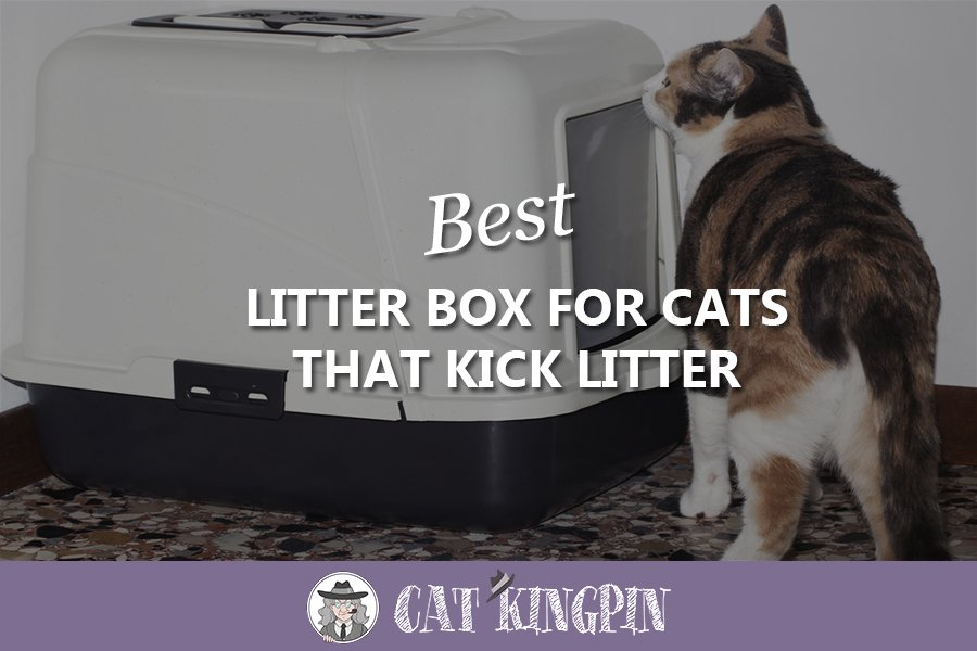Best Litter Box For Cats That Kick Litter