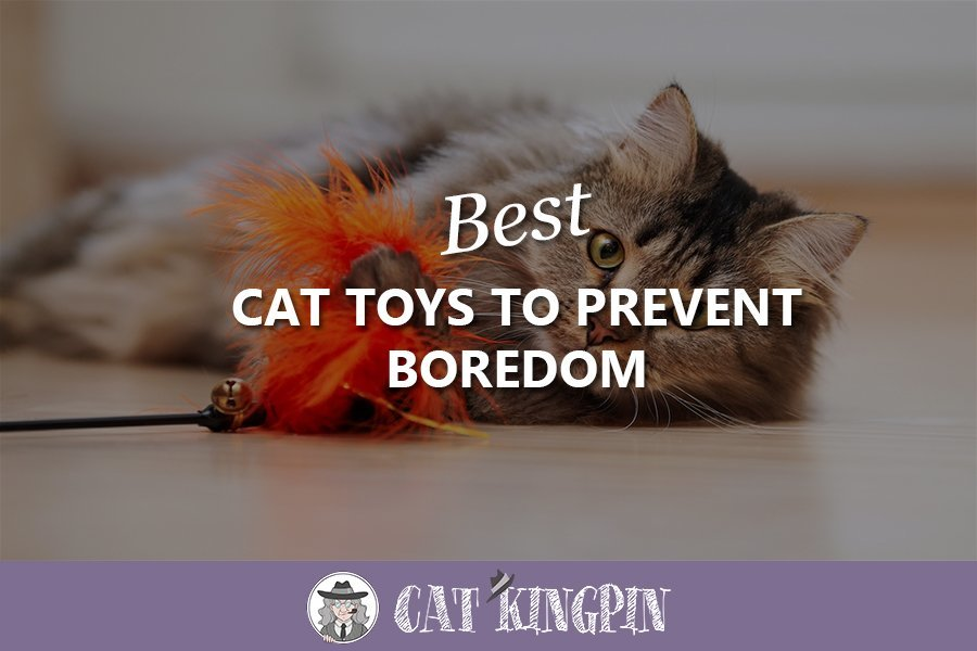 best cat toys to prevent boredom