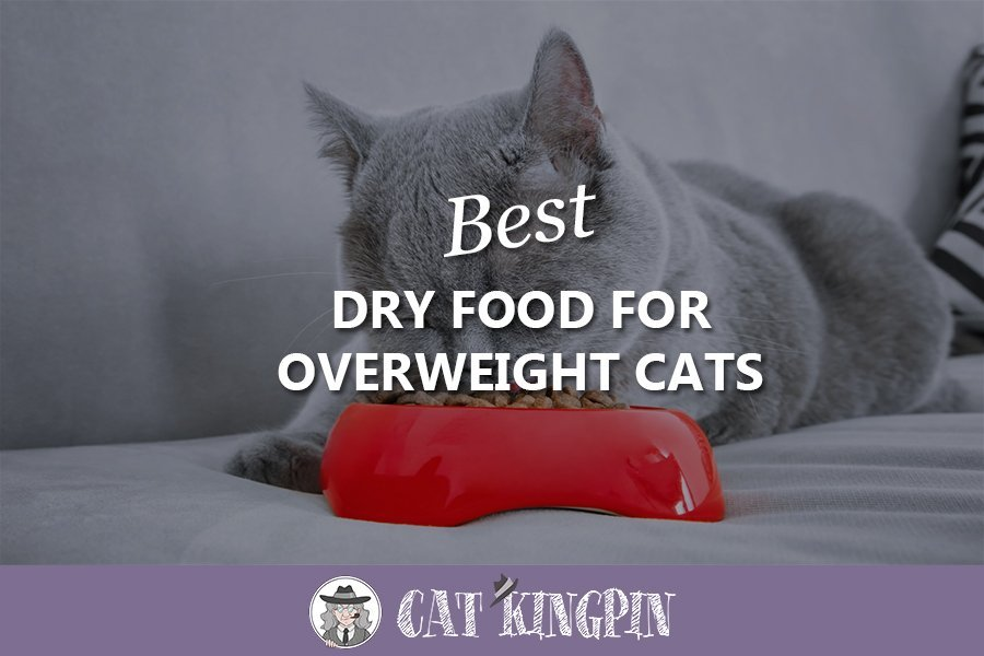 best dry food for overweight cats